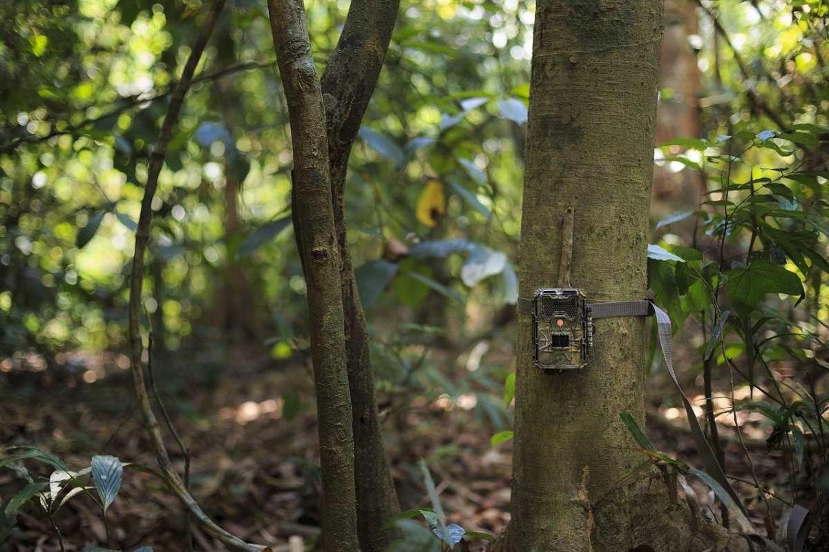 fototrappola su un albero nel bosco